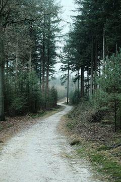 Winters bos op de Veluwe | Nederland | Natuur- en Landschapsfotografie van Diana van Neck Photography
