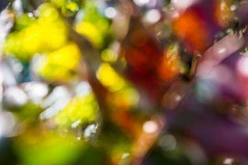 Kleuren van geluk van AnyTiff (Tiffany Peters)