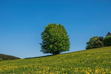 Heerlijk zomers weiland