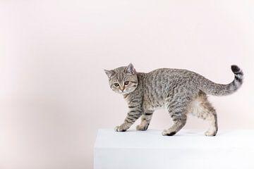 Kätzchen Bobbie von Janine Bekker Photography