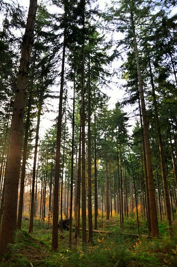 Namiddag in bos van Maurice Ultee