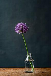 Foto | allium | sierui | paarse bloem in vaasje | Botanische | Stilleven