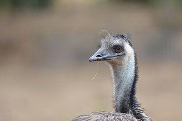 gedetaileerde Emu ... van Pascal Engelbarts
