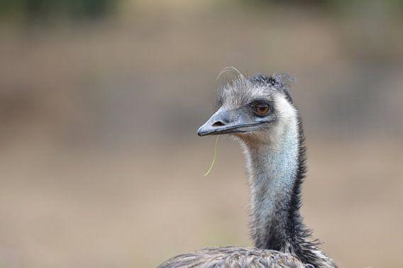 gedetaileerde Emu ...