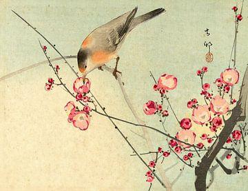 Singvogel auf Blütenzweig, Ohara Koson