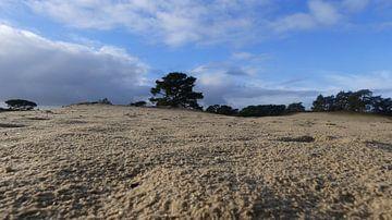 Wekeromse zand van Wilbert Van Veldhuizen