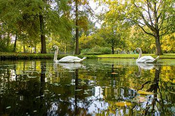 Schwäne im Park von Willian Goedhart
