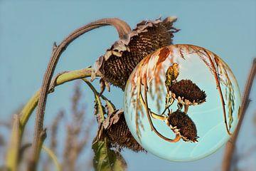In de glazen bol - zonnebloem in de herfst van Christine Nöhmeier
