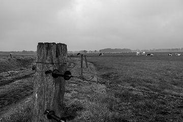 Scheuchdraht zur Weide mit Kühen von Lucas Planting