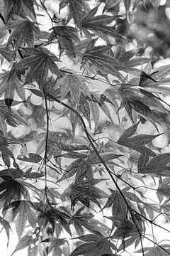 Plastic bladeren van Marly De Kok