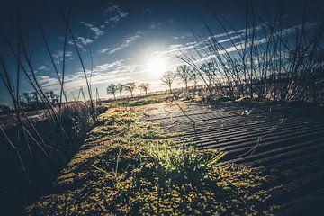Die Straßenansicht, die grünes Moos getroffen wurde, bedeckte den Boden von Fotografiecor .nl