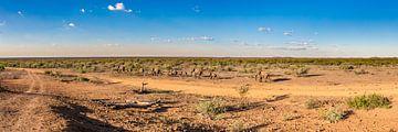 Madikwe Plains II van Thomas Froemmel