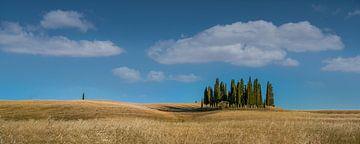 Toscaanse cipressen van Toon van den Einde