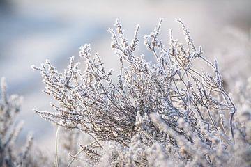 Heide met een koude deken van rijp van Michel Geluk