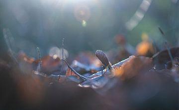 Sonnenlichtblätter von Tania Perneel