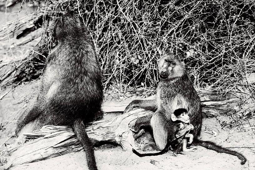 Baby aapje veilig achter mamaap  van Dexter Reijsmeijer