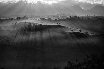 Teeplantage in Nebel gehüllt von Ellis Peeters