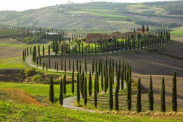 Laan met cipressen in de Crete Senesi, Toscane, Italië van Discover Dutch Nature