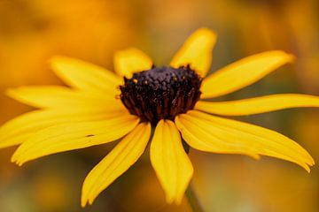 Gele zonnehoed bloem van KB Design & Photography (Karen Brouwer)