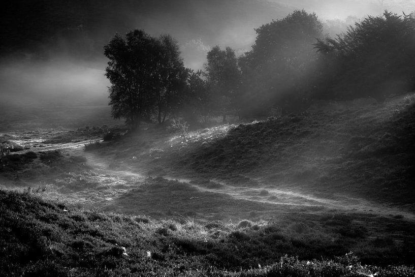 Veluwezoom zwart wit van Martijn van Steenbergen