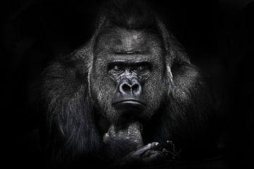 Volles Gesicht männlichen Gorilla liegend mächtige Hände spielen mit einem Zweig, riesige Schultern  von Michael Semenov