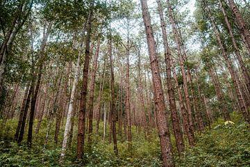 Wald von Myrthe Vlasveld