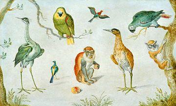 Studie van Vogels en apen, Cirkel van Jan van Kessel van
