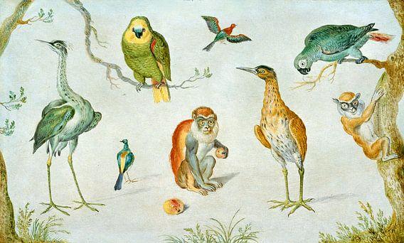 Studie van Vogels en apen, Cirkel van Jan van Kessel van Liszt Collection