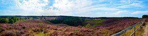 Panorama  de heide in bloei op de Posbank