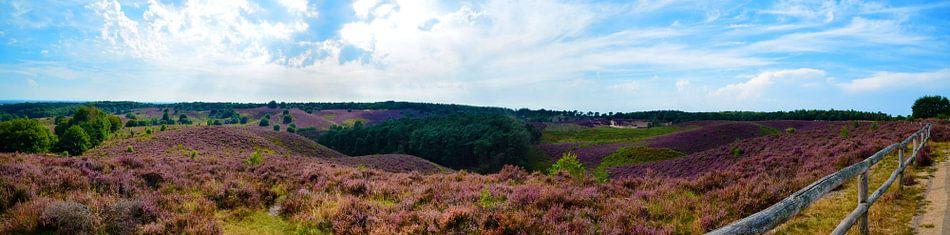 Panorama  de heide in bloei op de Posbank van Jessica Berendsen