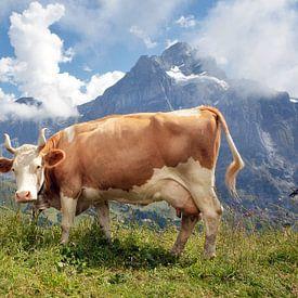 Prachtige koe in de Zwitserse Alpen van Fotografie Egmond
