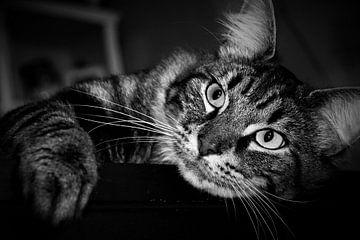 Wunderschöne Zypressen-Katze in schwarz-weiß von Maud De Vries