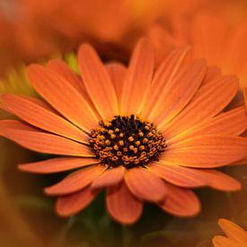 Oranje bloemen van John Leeninga