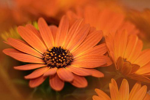 Oranje bloemen van