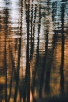 Bomen reflectie