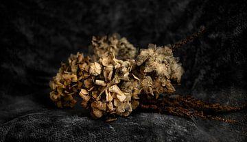 Trockener Blumenstrauß von MPhotographer