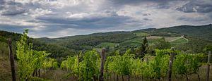 Chianti heuvels met wijngaard