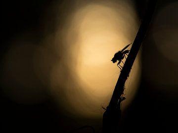 Vlieg met tegenlicht van Rutger van Loo