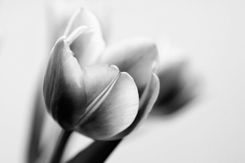 Tulpen (zwart-wit) van Ada Zyborowicz