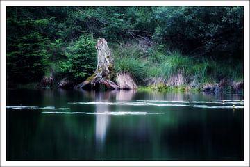 Baumstumpf am Schmölzersee von Franz Nagler