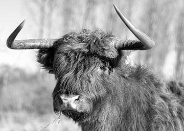 Portret van Schotse Hooglander Zwart/Wit van Charlene van Koesveld