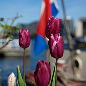Willem Holle WHOriginal Fotografie Profilfoto