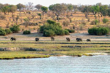 prachtig landschap met olifanten in Chobe national park van Merijn Loch