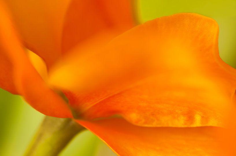 Floating Orange sur Monique Simons