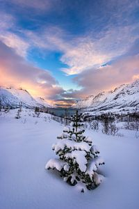 The lonely Spruce
