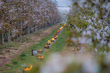 Vuurpotten in kersenboomgaard von Moetwil en van Dijk - Fotografie