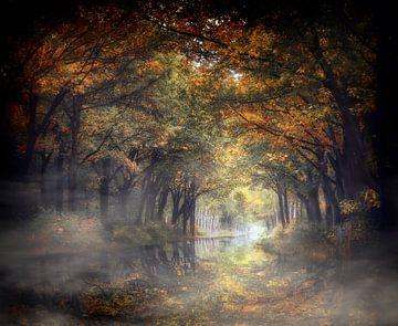 Naturel Élevé sur Kees van Dongen