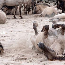 chevaux sauvages sur ÇaVa Fotografie