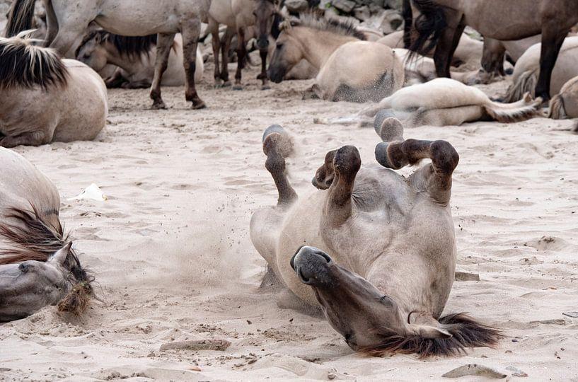 wild horses van ÇaVa Fotografie