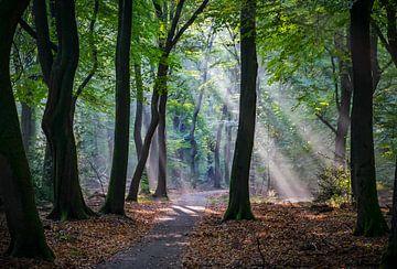 Het bos van Karin Tebes